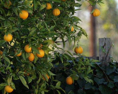 A Guideline For Your First Garden