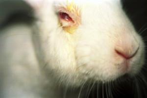 Industria cosmetica face testari pe animale pentru a ne ajuta sa fim mai frumoase